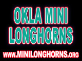 Mini-Longhorns-ButtonAd