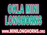 Mini-Longhorns-ButtonAd